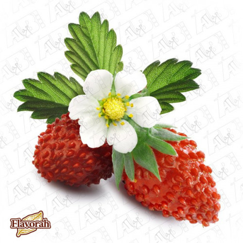Alpine Strawberry 20%