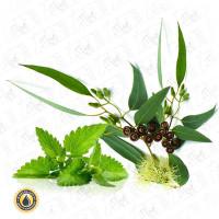 Eucalyptus with Mint